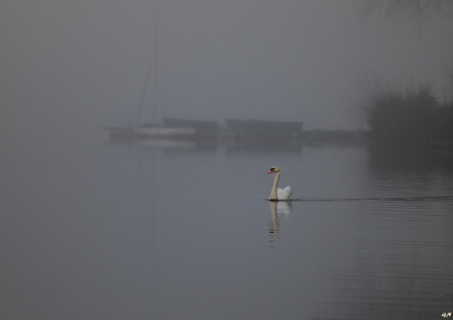 lac de genval 3.2013 © gilbert nauwelaers-003