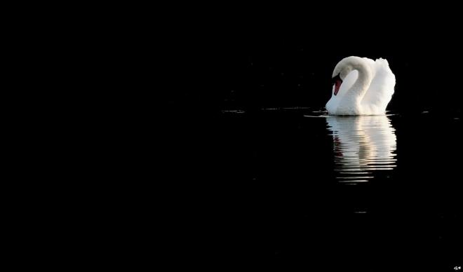 Lac de Genval 4.2012 © Gilbert Nauwelaers - 06