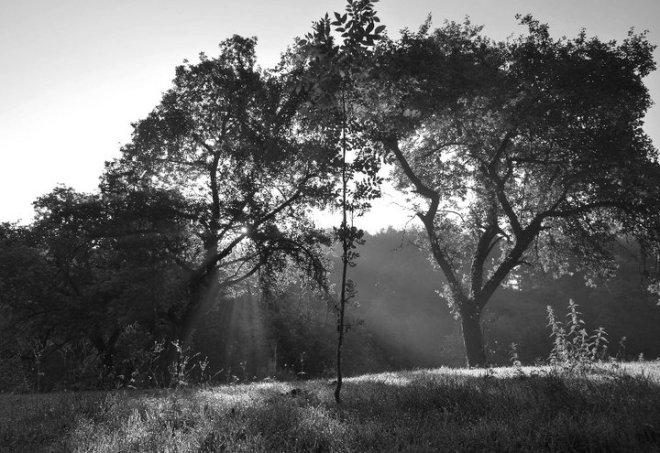 7 sentier passische (lumière) © gilbert nauwelaers