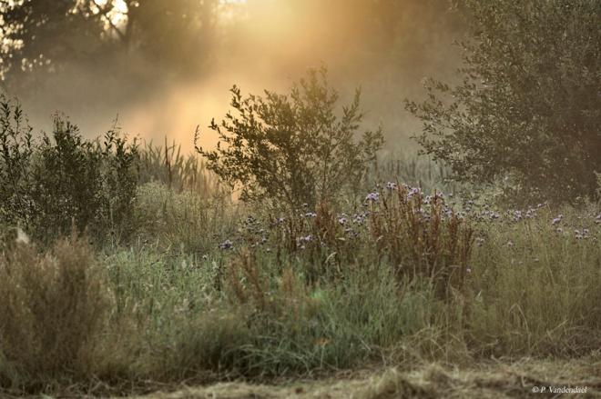 carpu 2011 © patrick vandendael
