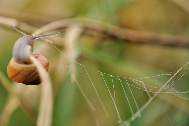 Limace Carpu 4.2014 © Patrick Vandendael - 2