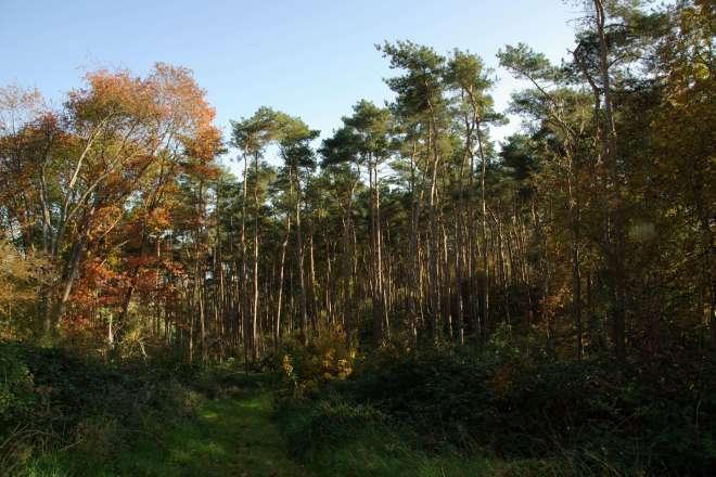 La Sapinière Bois du Bosquet à Rosières © Eric de Séjournet