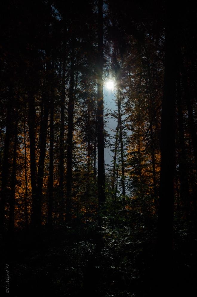 Parc communal lune 11.2014 © Cedric Muscat - 1