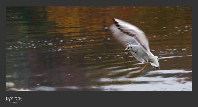 13 lac de genval © patrick bostyn