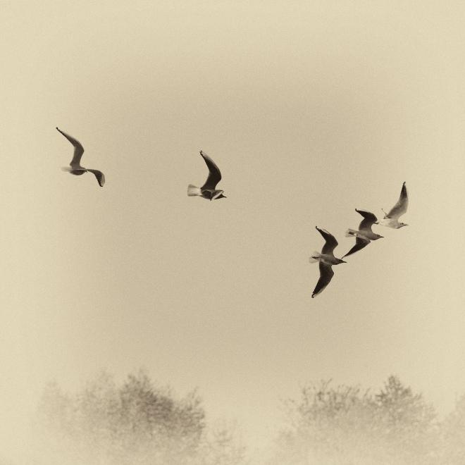 lac de genval © patrick bostyn