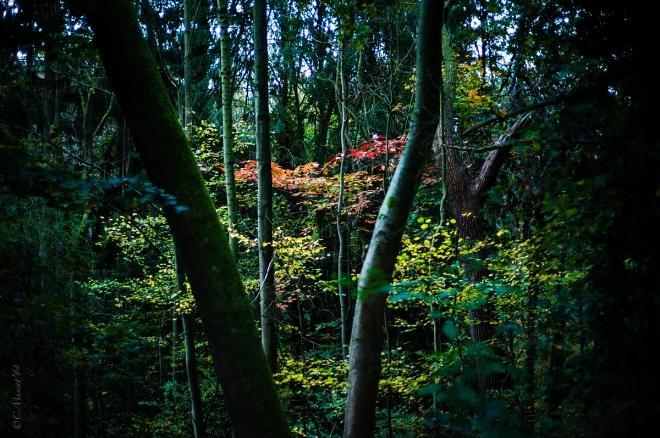 Parc communal 11.2014 © Cedric Muscat - 1