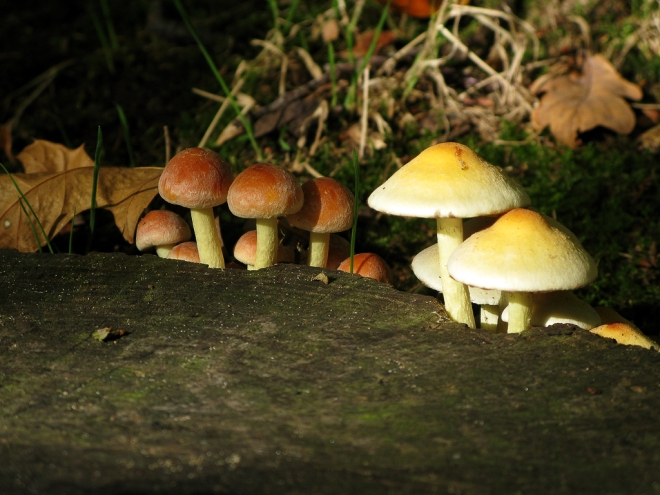parc communal champignons 10.2012 © cedric muscat