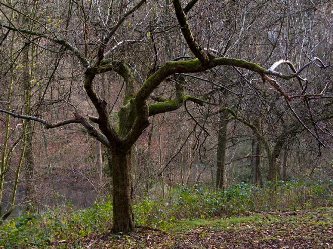 parc communal (pommier) 12.2011 © cedric muscat