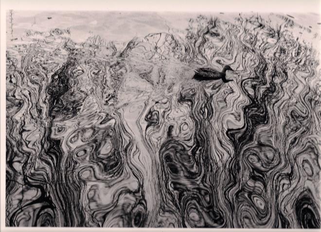 canard psychédélique (lac de genval) 2.2010 © anne hilgers