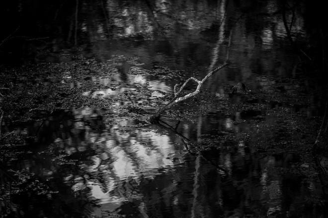 Etang Gillet Parc communal 5.2014 © Cedric Muscat - 1