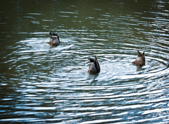synchro water ballet etang gillet 4 © cedric muscat