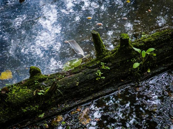 1003 etang gillet parc communal 9.2015 © cedric muscat
