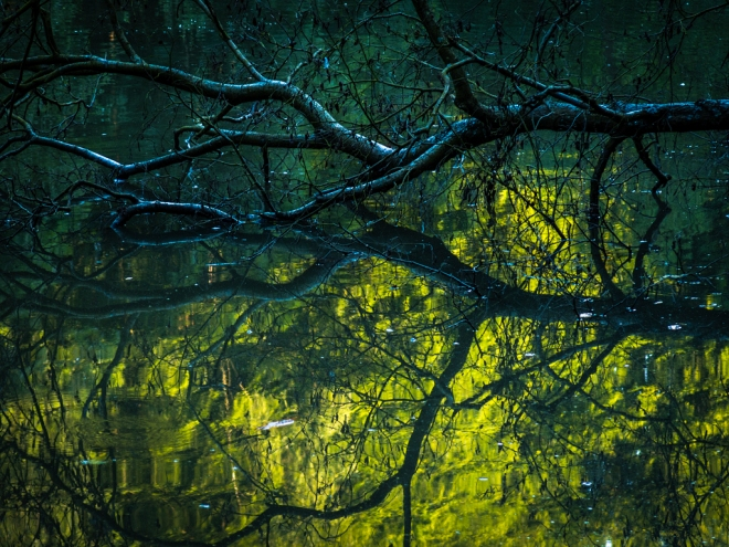 930 etang gillet 8.2015 © cedric muscat1