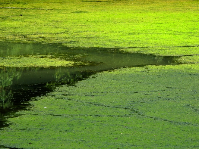 Abstract Etang Gilet 9.2012 © Cedric Muscat