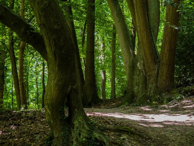 905 parc communal 7.2015 © cedric muscat