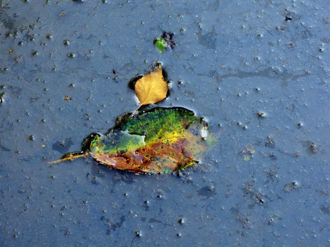 a la dérive parc communal 9.2012 © cedric muscat