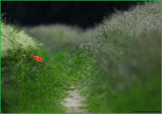 sentier du trou margot 6.2012 © gilbert nauwelaers