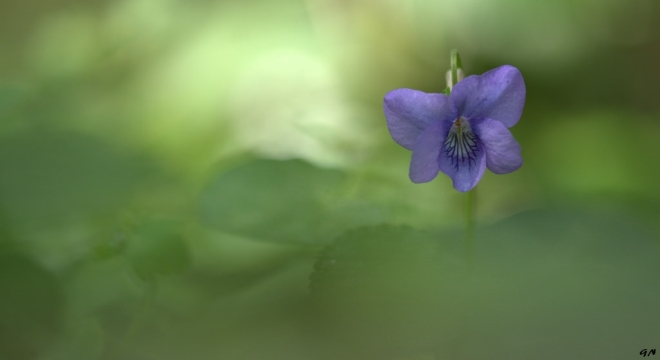 Violette Trou Margot 4.2014 © Gilbert Nauwelaers - 3