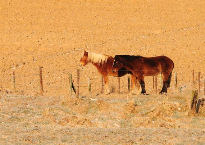carpu 2.2012 © gilbert nauwelaers