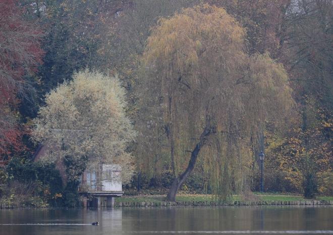lac de genval 11.2012 f © gilbert nauwelaers-002
