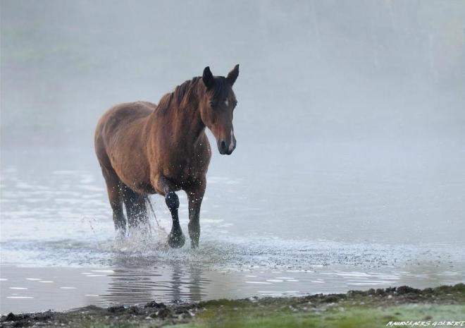 prairies inondables du carpu cheval © gilbert nauwelaers