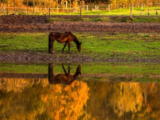 prairies inondables du coucou 11.2013 © cedric muscat.inondées_2