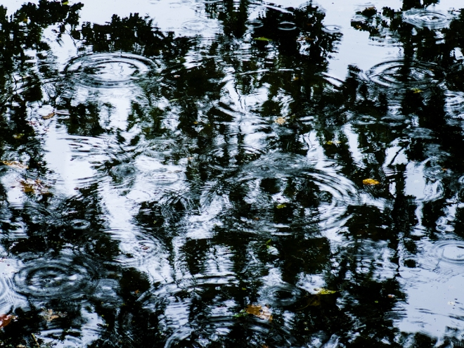 1022 etang gillet 10.2015 © cedric muscat3