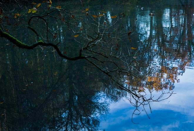 Etang Gillet 11.2014 © Cedric Muscat - 2