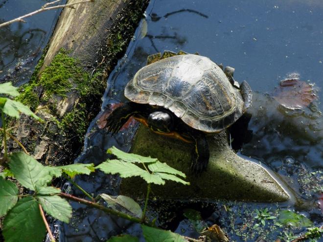 etang gilet tortue 10.2012 © cedric muscat