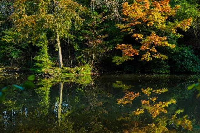 Etang Gillet Parc communal 11.2014 © Cedric Muscat