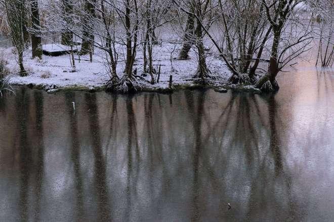 Drève des Etangs Bois de Rixensart 2.2013 © Eric de Séjournet