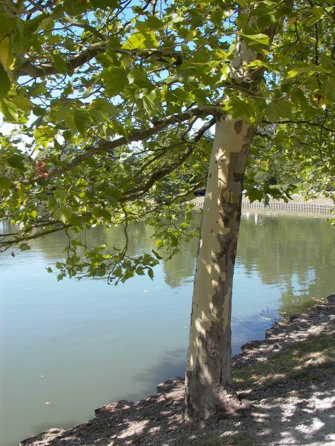 lac de genval © lena de boeck