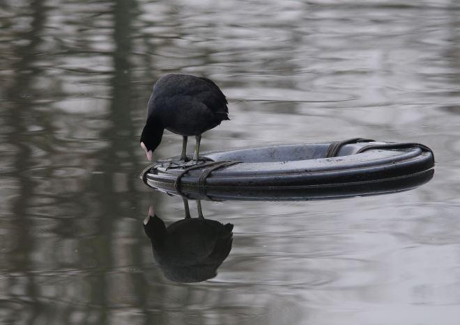 Lac de Genval 1.2012 © Gilbert Nauwelaers-4