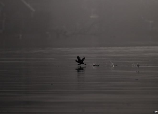 lac de genval 3.2013 © gilbert nauwelaers-004