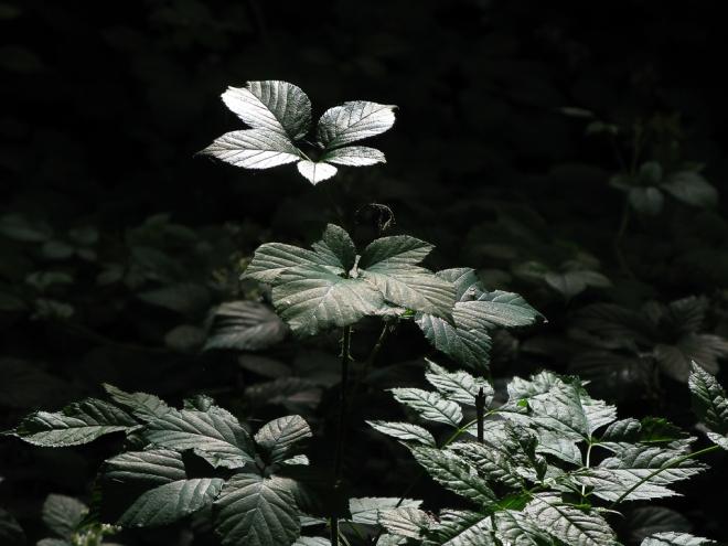 parc communal recherche de la lumière 6.2012 © cedric muscat