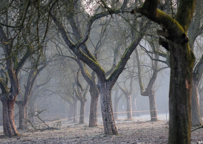 sentier du plagniau 4.2013 © gilbert nauwelaers