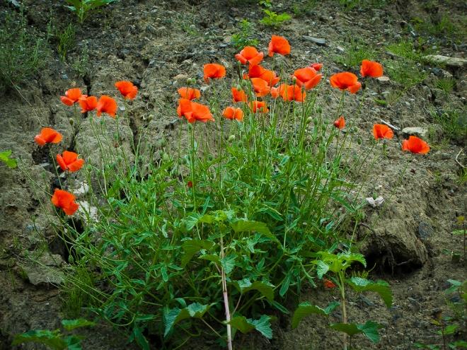 sentier des rossignols 7.2012 © cedric muscat