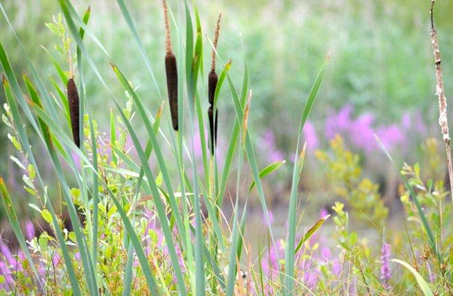 rixensart natura 2000 (le confluent) 7.2013 © sophie chabane
