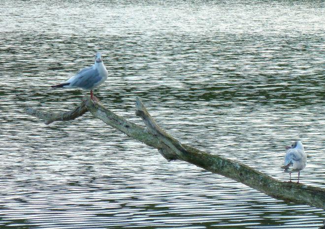 lac de genval 7.2013 mirador © marie goffart
