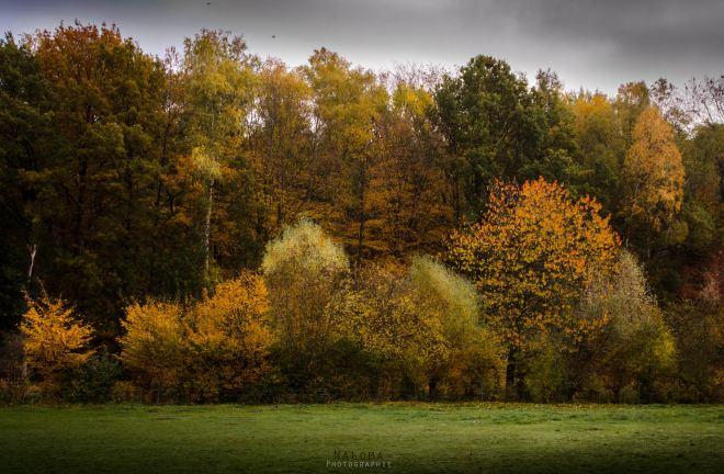 1110 bois du carpu 11.2015 © frederique peetroons1