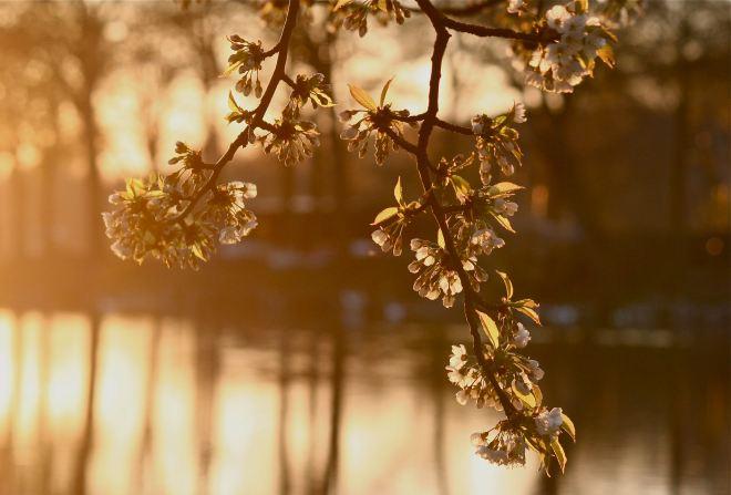 lac de genval 20090410 © andré riche