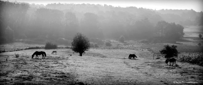 le carpu 9.2013 © frédéric peetroons