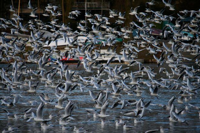 mouettes sur le lac de genval © andré riche