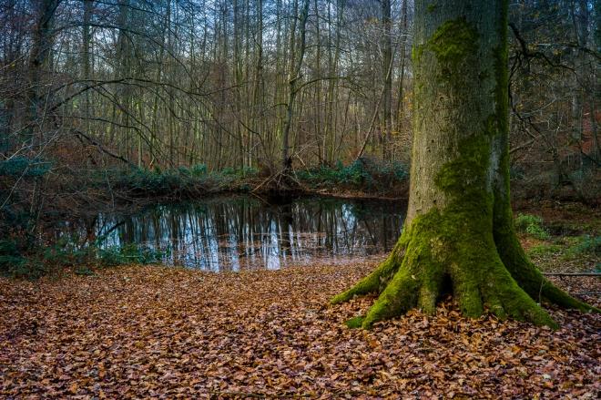 Bois de Rixensart 12.2013 © Cedric Muscat