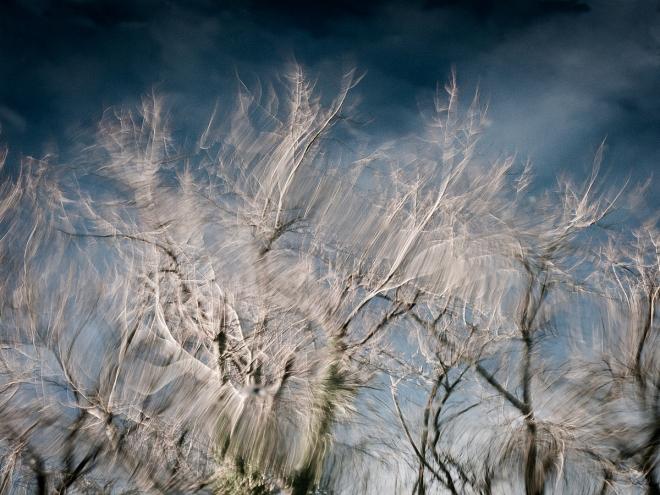 etang gillet (réflections arbre) 1.2013 © cedric muscat
