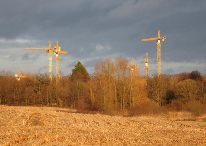 Vallée de la Lasne Carpu chantier des Papeteries 1.2014 © Gilbert Nauwelaers-004.2014 © Gilbert Nauwelaers-004