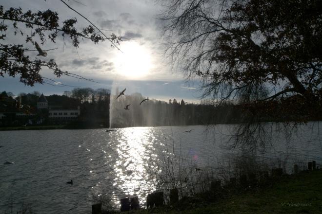 127. lac de genval 1.2014 © véronique debouck