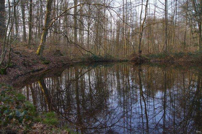 La Mare aux Fées Bois de Rixensart 3.2014 © Christine Blavier