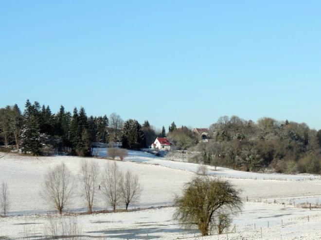 Carpu Vallée de la Lasne Genval (neige) 12.2014 © Christian Petit - 08