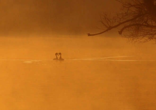 lac de genval 3.2012 © gilbert nauwelaers-003